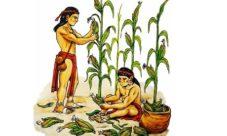 El maíz y la agricultura de los mayas
